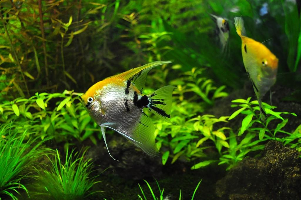観賞魚用ヒーターの寿命を簡単に見分ける方法