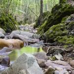 川などに転がっている天然の石や流木を飼育水槽で安全に使う方法