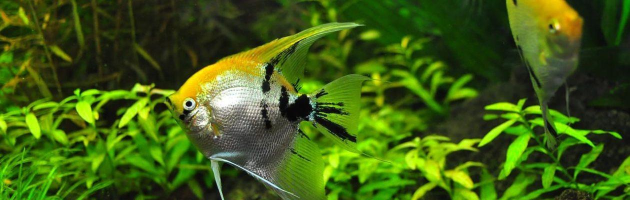 金魚・熱帯魚・海水魚を飼育しよう! 金魚・熱帯魚・水草・海水魚など基本的な水槽飼育の方法、管理のコツ、裏技などをご紹介