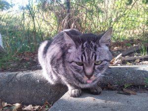 地域猫 名古屋 愛想なし