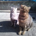 去勢したオス猫とメス猫の見分け方ってどうやるの?
