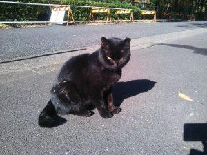 地域猫 名古屋 クロ