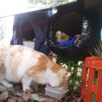 地域猫 名古屋 ヤンヤン