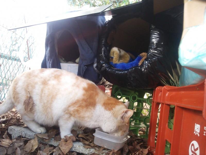 これで雨も寒い日も安心!猫ちゃん用段ボールハウスの作り方