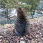 地域猫 名古屋 トラの写真