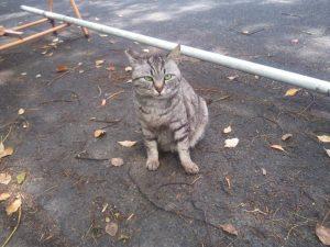 通称「加藤一二三氏 野良猫餌やり裁判」って知ってる?