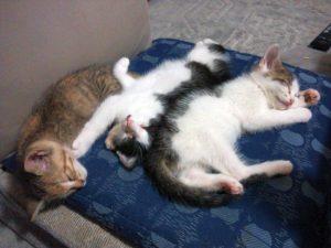 仔猫保護から里親さんのところに行って・・・・。