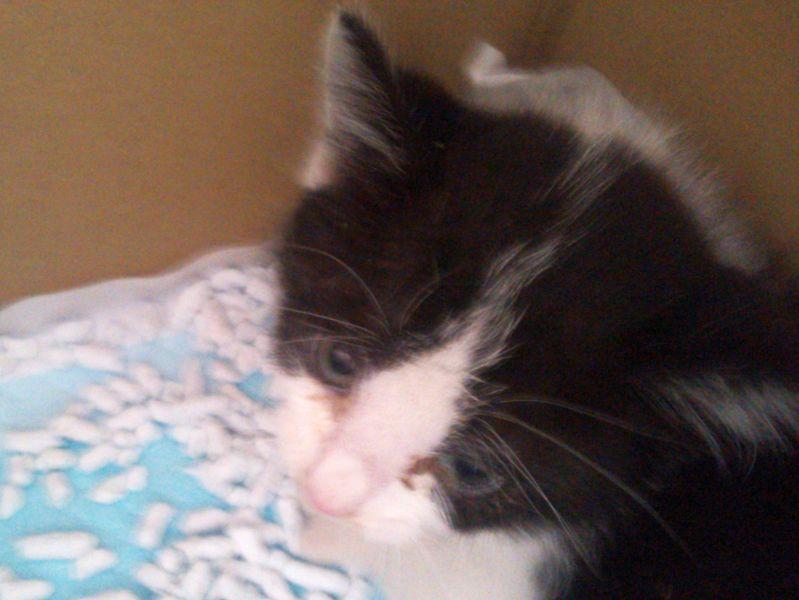 保護した白黒猫の「モモ」はグルメな猫??