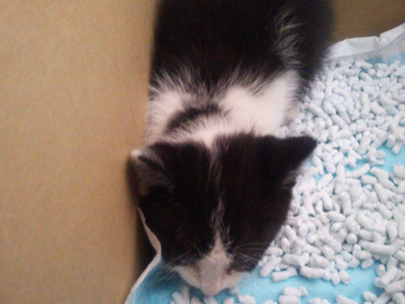 保護した捨て猫ちゃんすごい夜泣きでした。今も箱の中で鳴いています・・・