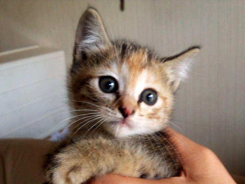 昨日保護した猫ちゃんの写真(1/2匹)