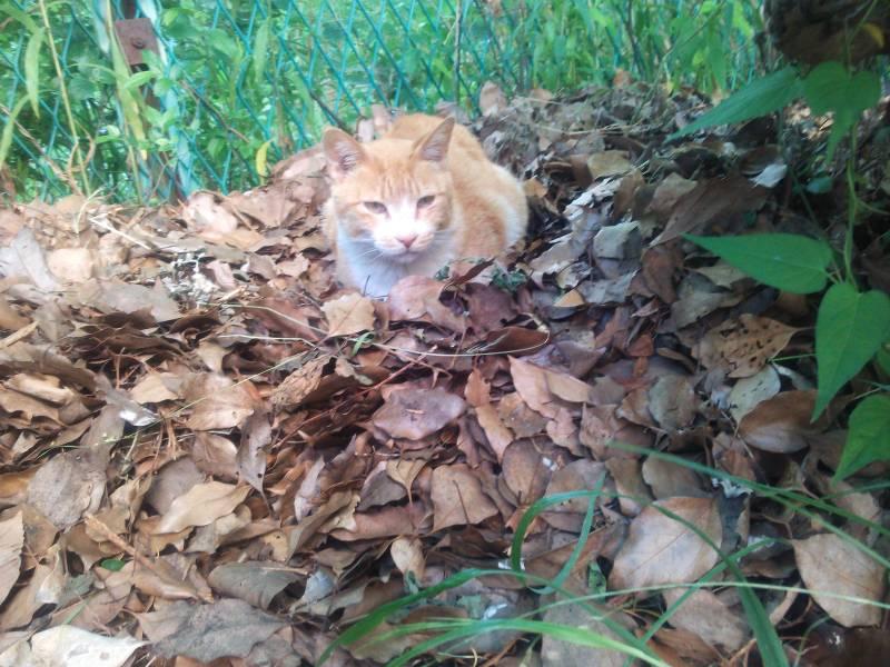 昨夜捨て猫と思われる白黒の猫を目撃!?+今朝の猫ちゃんたちの動画