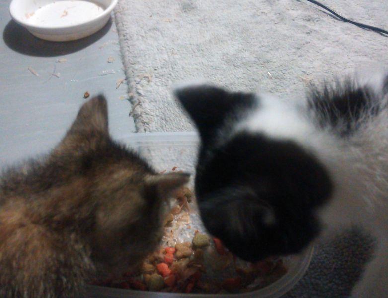 保護した3匹の仔猫たちの動画を追加しました