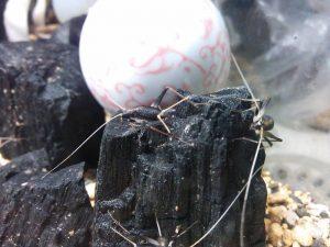 虫は虫でも嫌われ者と・・・・・