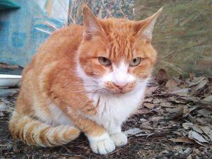 腎臓の機能が低下している「茶ちゃん」を何とか救えないか? 猫の腎臓疾患に関する個人的なお勉強ノート