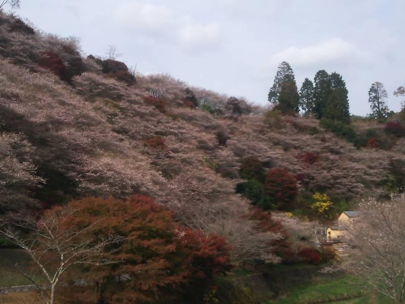 小原四季さくらと紅葉
