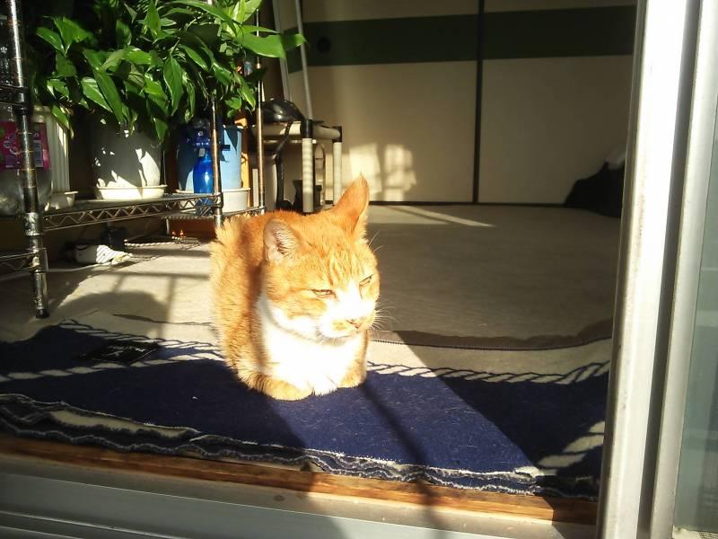 腎不全に猫エイズウィルスキャリアなんて・・・・。