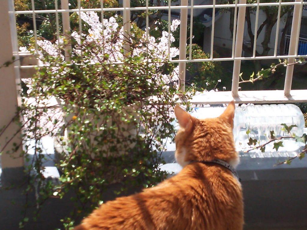 春 🌸 満開!!