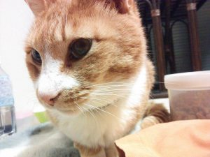 腎不全の猫ちゃんと関わるには【自然】と【なりゆき】が一番なのかも?