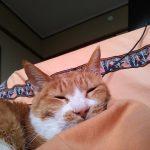 経過観察中ではあるものの腎不全猫「茶くん」には効果あり!?の【はちみつ】、次は・・・