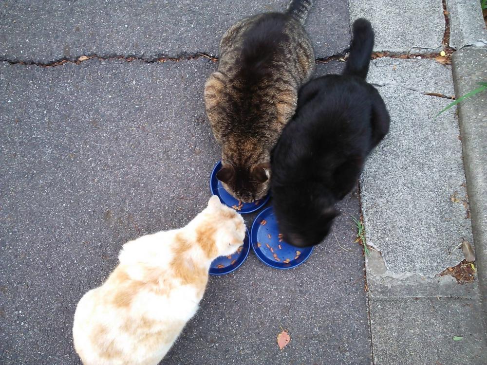 久しぶりの外猫記事、ご飯で集合写真。