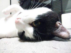 がんばれ!わが町名古屋の地域猫&我が家の家ネコ日記