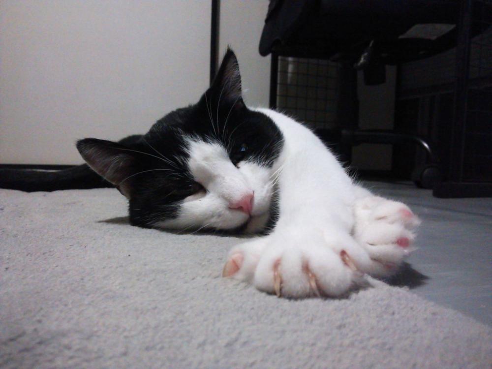 台風の巨大化に雨の降り方の異常、外猫ちゃんは大変です!!