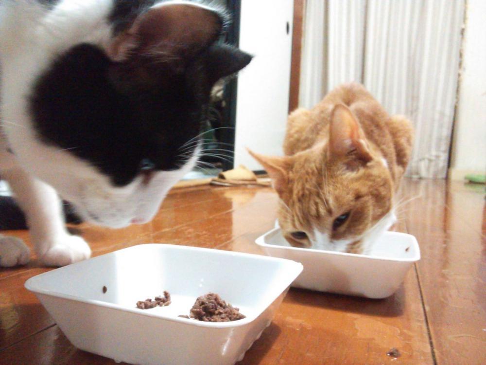 モモと茶 猫