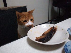 魚、さかな、さかなぁ~、手を出さずにはいられない。