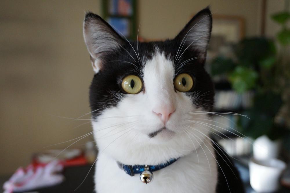 腎不全の猫の多尿は半端ない量。