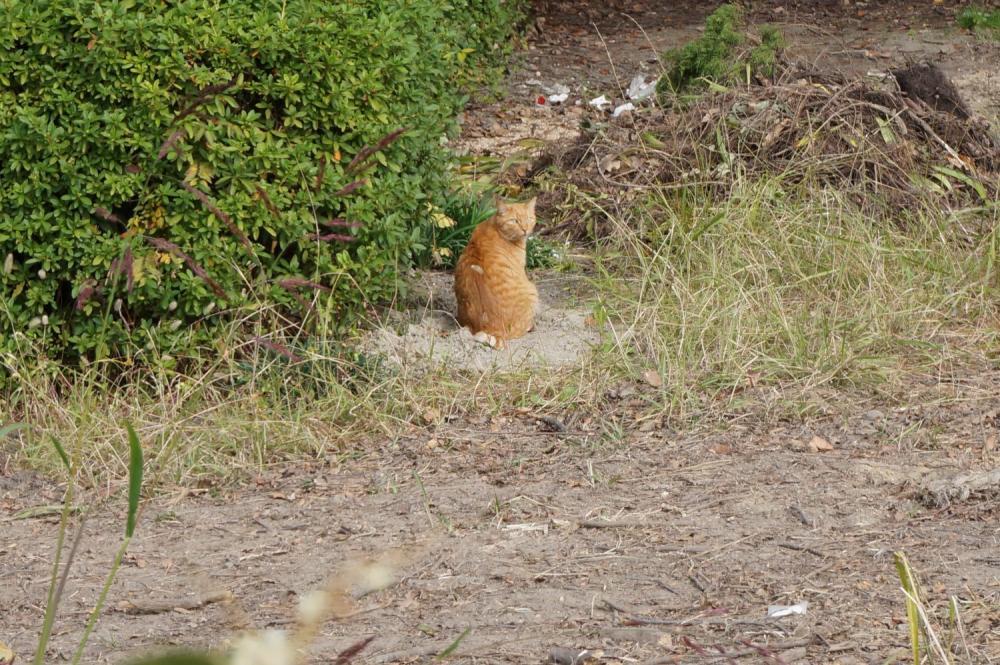 名城公園 猫