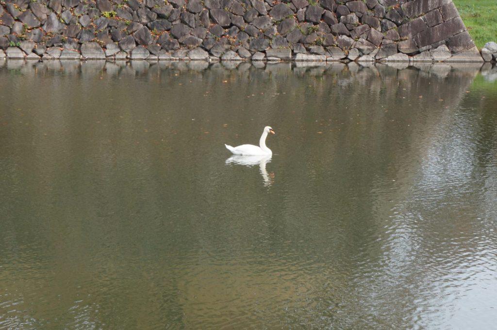 名古屋城 鳥