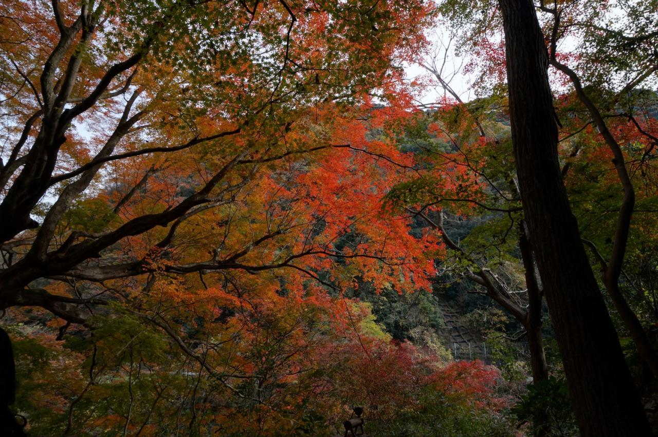 旧国鉄中央線、愛岐トンネルの紅葉がすばらしい。