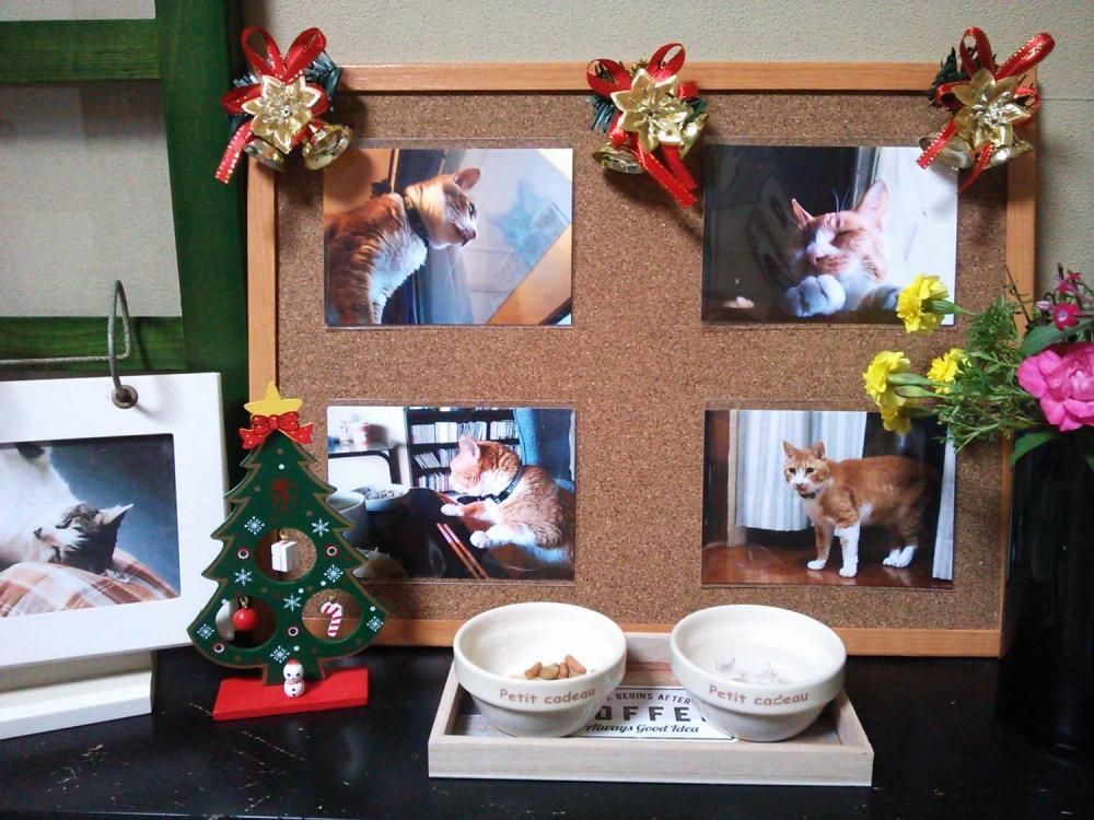 ささやかですが、茶くんの祭壇?もプチクリスマスにしてあげました