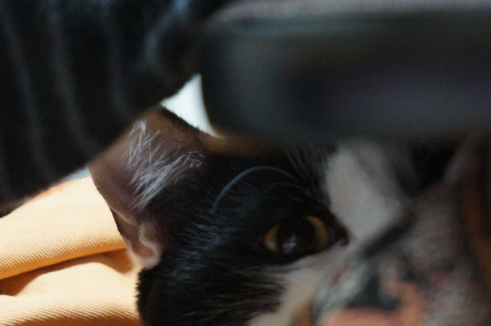 片眼で見てる時と、両眼で見てる時は・・・・。の画像|Ordinary Life