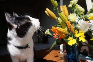 猫は住環境が変わると慣れるまでに・・・・