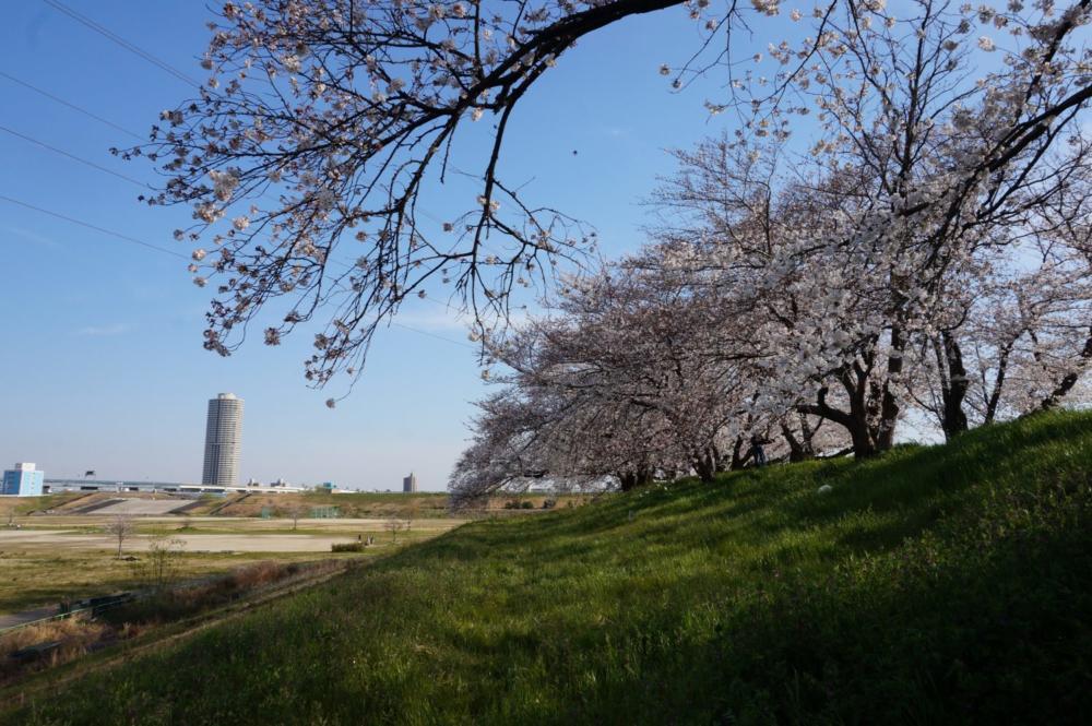 【桜】名古屋市西区の『蛇池公園』へ行ってきましたの画像|Ordinary Life