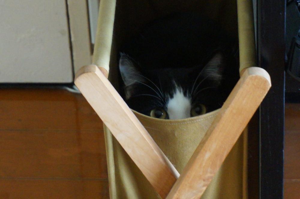 モモの遊びモード、隠れてるつもり・・・・。
