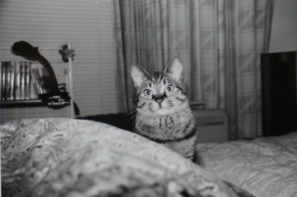 人生最初、猫との出会い。