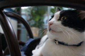 """モモはどうやら""""依存猫""""らしい・・・・"""