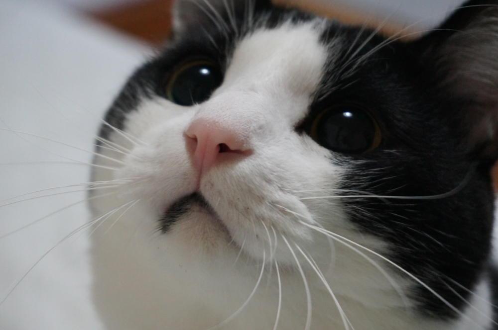 まさに我が家は、『 猫様の下僕になってる 』