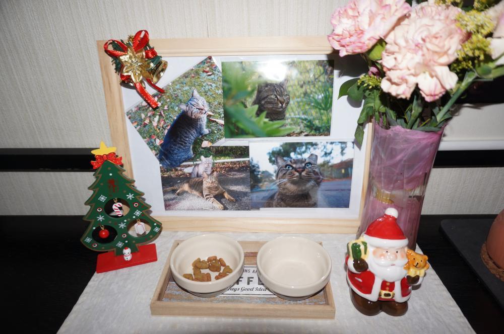 何もしてやれなかったけど・・・トラの写真パネルと簡易祭壇を作ってあげました