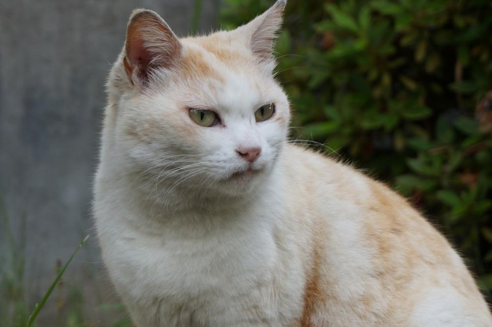 外暮らしの長い猫と家暮らしの長い猫の初動の違い