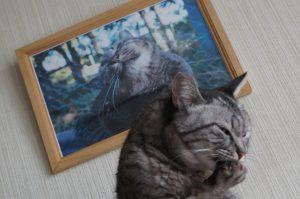 命日!!、ココの娘トラが虹の橋を渡ったのが昨年・・