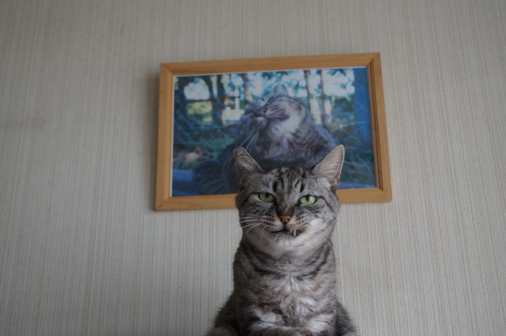 命日!!、ココの娘トラが虹の橋を渡ったのが昨年・・の画像|Ordinary Life