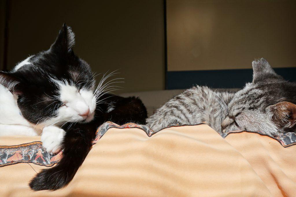 ココちゃん立派な家猫に変~身!!の画像|Ordinary Life