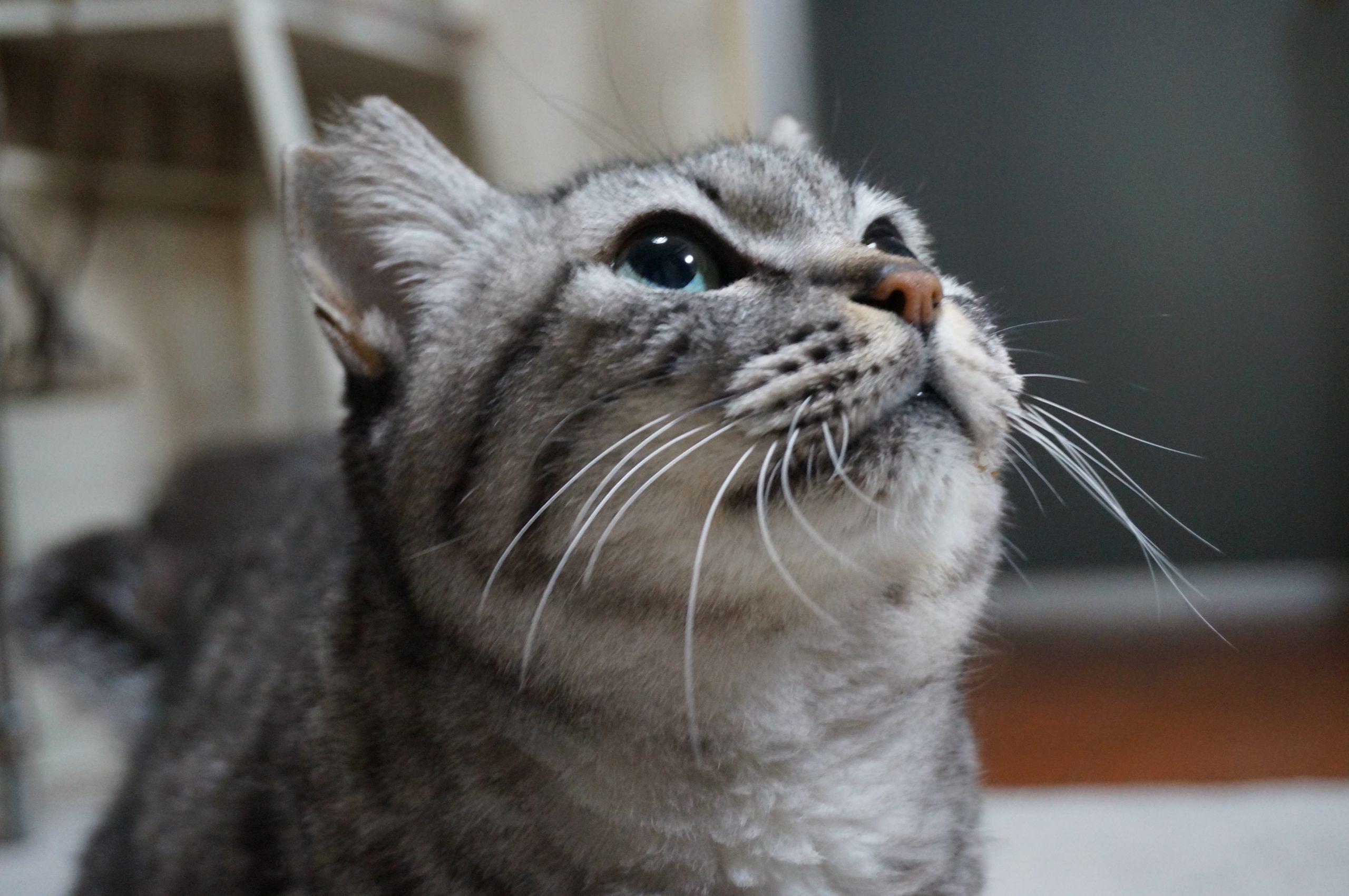 猫用段ボールハウス+発泡スチロールのダブル仕様を作った、保温力倍増!!