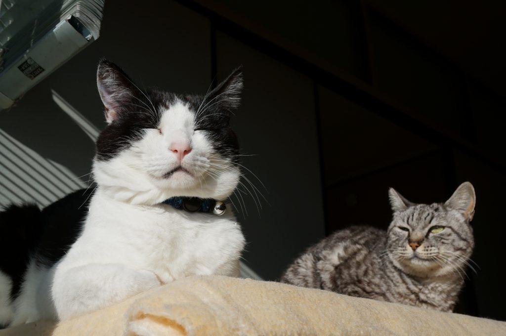 猫用段ボールハウス+発泡スチロールのダブル仕様を作った、保温力倍増!!の画像|Ordinary Life