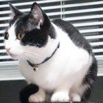 猫の腎臓病の治療薬開発